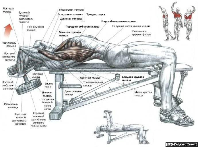 Упражнение на грудь с одной гантелей. Смотреть видео как правельно качать